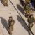 """בג""""ץ: חובת הצבא לחקור כל מקרה הרג של פלסטינים המעורר חשד להפרת חוק"""